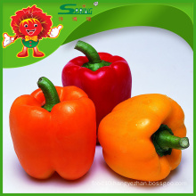 Sweet pepper red chilly powder